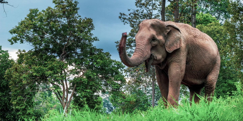 ช้างคือหัวใจของเรา